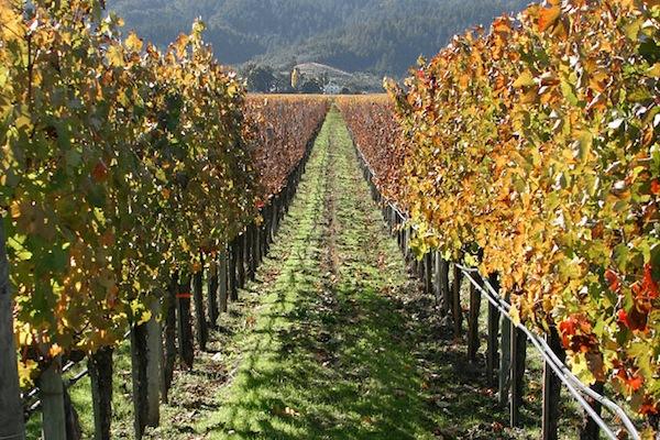 Les meilleures destinations pour les amateurs de vins