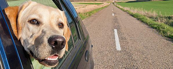 Tout ce qu'il faut savoir pour partir en voyage avec un animal de compagnie